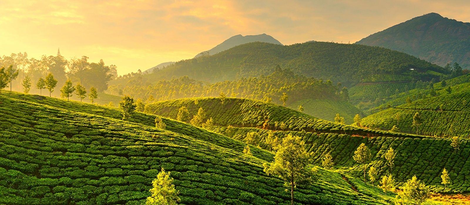destination-munnar-south-india